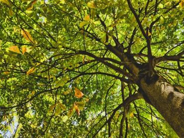 Quels arbres choisir pour la ville de demain?